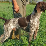 cani-da-caccia